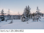 Frozen forest covered by snow. Стоковое фото, фотограф Liseykina / Фотобанк Лори
