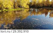 Купить «Russian autumn landscape with birches, pond and reflection», видеоролик № 29392910, снято 25 апреля 2019 г. (c) Володина Ольга / Фотобанк Лори