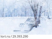 Купить «Winter landscape in cold tones - winter frosty trees and old stone stairs in the winter park under snowfall», фото № 29393290, снято 11 декабря 2017 г. (c) Зезелина Марина / Фотобанк Лори