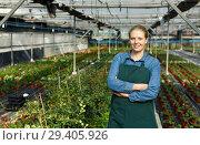 Купить «Young female gardener in apron standing near seedlings of oregano in pots in greenhouse», фото № 29405926, снято 3 октября 2018 г. (c) Яков Филимонов / Фотобанк Лори