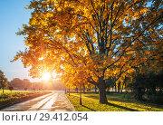 Купить «Дуб и солнце autumn oak and morning sun», фото № 29412054, снято 9 октября 2018 г. (c) Baturina Yuliya / Фотобанк Лори