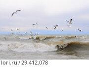 Купить «Чайки над морем», эксклюзивное фото № 29412078, снято 15 марта 2012 г. (c) Юрий Морозов / Фотобанк Лори