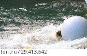 Купить «Polar bear playing in water», видеоролик № 29413642, снято 31 октября 2018 г. (c) Игорь Жоров / Фотобанк Лори