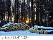 Купить «Wood, wood, Polter, round timber, winter, the sun, sundown, Utzenstorf, snow», фото № 29414234, снято 18 июля 2019 г. (c) age Fotostock / Фотобанк Лори