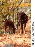 Купить «Horses in the autumn forest», фото № 29419662, снято 19 октября 2018 г. (c) Яна Королёва / Фотобанк Лори