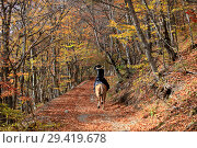 Horse ride, horsewoman in black riding a horse rides in the autumn forest. Стоковое фото, фотограф Яна Королёва / Фотобанк Лори