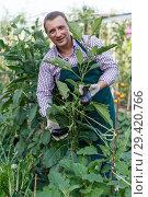 Купить «Farmer demonstrating eggplant», фото № 29420766, снято 13 августа 2018 г. (c) Яков Филимонов / Фотобанк Лори