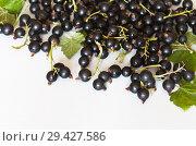 Купить «Ripe black currant berries on the stalks and green leaves on a white table. Berry background. Healthy food. Close-up view», фото № 29427586, снято 3 августа 2018 г. (c) Виктория Катьянова / Фотобанк Лори