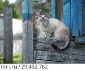 Купить «Portrait of a strange cat. The cat is a purebred. Have animal disease eye», фото № 29432762, снято 16 ноября 2018 г. (c) Ирина Козорог / Фотобанк Лори