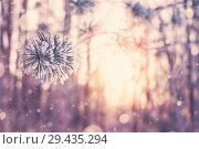 Купить «Зимний фон», фото № 29435294, снято 16 ноября 2018 г. (c) Икан Леонид / Фотобанк Лори