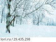 Купить «Winter landscape - frosty trees in winter forest in the morning. Winter landscape with winter forest trees», фото № 29435298, снято 11 декабря 2017 г. (c) Зезелина Марина / Фотобанк Лори