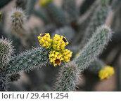 Купить «A Beautiful cactus with an yellow flowers», фото № 29441254, снято 5 ноября 2018 г. (c) Володина Ольга / Фотобанк Лори