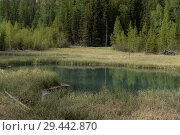 Купить «Голубое гейзерное озеро, около села Акташ, Улаганский район, Горный Алтай, Сибирь, Россия», фото № 29442870, снято 7 июня 2018 г. (c) Free Wind / Фотобанк Лори