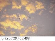 Купить «Two seagulls in the fog flying against the autumn evening sky», фото № 29455498, снято 5 октября 2018 г. (c) Круглов Олег / Фотобанк Лори