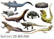 Купить «collection of reptiles», фото № 29465066, снято 20 октября 2019 г. (c) Яков Филимонов / Фотобанк Лори