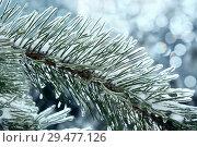 Купить «Ветка еловая, иглы во льду. Зимний фон с боке», фото № 29477126, снято 13 ноября 2016 г. (c) Татьяна Белова / Фотобанк Лори