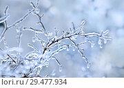 Купить «Ветка во льду. Зимний фон», фото № 29477934, снято 11 ноября 2016 г. (c) Татьяна Белова / Фотобанк Лори
