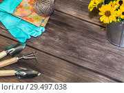 Купить «Gardening. Planting and replanting plants. A bouquet of yellow bright garden flowers in a steel bucket, working rubber gloves and garden tools on a wooden background in a rustic style with a copy space», фото № 29497038, снято 9 сентября 2018 г. (c) Светлана Евграфова / Фотобанк Лори