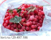 Купить «Красная смородина в пакете для замораживания пищевых продуктов», фото № 29497186, снято 8 сентября 2018 г. (c) Румянцева Наталия / Фотобанк Лори