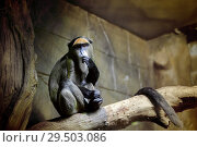 Купить «Sad monkey in the cage», фото № 29503086, снято 21 ноября 2018 г. (c) Юлия Кузнецова / Фотобанк Лори