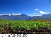 Картофельное поле в высокогорье. Стоковое фото, фотограф Дмитрий Воробьев / Фотобанк Лори