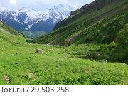 Альпийские луга приэльбрусья. Стоковое фото, фотограф Дмитрий Воробьев / Фотобанк Лори