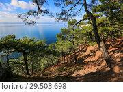 Купить «Beautiful seascape through pine green forest», фото № 29503698, снято 28 октября 2016 г. (c) Яна Королёва / Фотобанк Лори