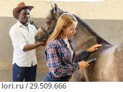 Купить «Girl and man shearing horse with trimmer», фото № 29509666, снято 2 октября 2018 г. (c) Яков Филимонов / Фотобанк Лори