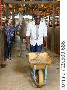 Купить «Man and woman delivering oats at stable», фото № 29509686, снято 2 октября 2018 г. (c) Яков Филимонов / Фотобанк Лори