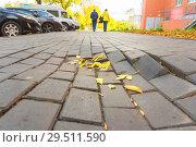 Купить «Destruction of paving slabs.», фото № 29511590, снято 3 октября 2018 г. (c) Акиньшин Владимир / Фотобанк Лори
