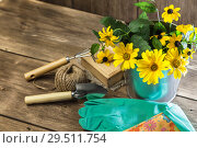 Купить «Gardening. Hobby. Planting and replanting plants. A bouquet of yellow bright garden flowers in a steel bucket and garden tools on a wooden background in rustic style with a copy space», фото № 29511754, снято 9 сентября 2018 г. (c) Светлана Евграфова / Фотобанк Лори