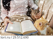 Купить «red and tabby and owner reading book at home», фото № 29512690, снято 15 ноября 2017 г. (c) Syda Productions / Фотобанк Лори