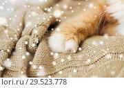 Купить «close up of red cat paw on blanket over snow», фото № 29523778, снято 15 ноября 2017 г. (c) Syda Productions / Фотобанк Лори