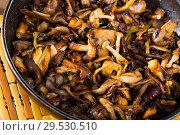 Купить «Delicious freshly cooked fried oyster mushrooms in a frying pan», фото № 29530510, снято 9 декабря 2018 г. (c) Яков Филимонов / Фотобанк Лори