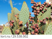 Купить «close up of cactus growing outdoors over blue sky», фото № 29538002, снято 3 марта 2018 г. (c) Syda Productions / Фотобанк Лори