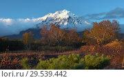 Купить «Stunning volcanic landscape, view of rocky cone volcano, yellow-orange forest», видеоролик № 29539442, снято 29 сентября 2018 г. (c) А. А. Пирагис / Фотобанк Лори
