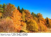 Купить «Autumn trees leaves multicolored», фото № 29542090, снято 12 октября 2018 г. (c) Дмитрий Брусков / Фотобанк Лори