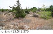 Купить «The nature of island of Cyprus in November», видеоролик № 29542370, снято 5 ноября 2018 г. (c) Володина Ольга / Фотобанк Лори