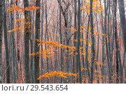 Купить «trunks of young trees on an autumn day with bare branches», фото № 29543654, снято 11 ноября 2017 г. (c) Константин Лабунский / Фотобанк Лори