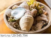 Купить «close up of seashells and corals in bowl on table», фото № 29545794, снято 16 февраля 2018 г. (c) Syda Productions / Фотобанк Лори
