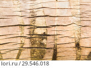 tree bark or wooden surface background. Стоковое фото, фотограф Syda Productions / Фотобанк Лори