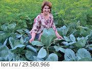 Купить «A woman grows cabbage in the garden», фото № 29560966, снято 17 июля 2017 г. (c) Володина Ольга / Фотобанк Лори