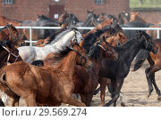 Купить «Stuet Graditz, horses at gallop on a sand paddock», фото № 29569274, снято 15 апреля 2018 г. (c) Caro Photoagency / Фотобанк Лори