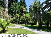 Купить «Sochi, Russia - June 5. 2018. Fragment of arboretum with a path», фото № 29572362, снято 5 июня 2018 г. (c) Володина Ольга / Фотобанк Лори
