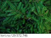 Купить «Еловые ветви и белый снег (фон)», фото № 29572746, снято 5 августа 2018 г. (c) Екатерина Овсянникова / Фотобанк Лори