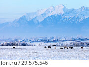 Купить «Siberian village Nikolsk in winter frosty day. View of the Tunka foothill valley and the snow-capped peaks of the mountains of the Eastern Sayan. Beautiful mountain winter landscape», фото № 29575546, снято 4 января 2014 г. (c) Виктория Катьянова / Фотобанк Лори