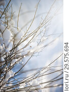 blur winter background with snow on branches. Стоковое фото, фотограф katalinks / Фотобанк Лори