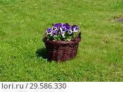 Купить «Элементы ландшафтного дизайна плетеная корзина с цветами в Спасо-Влахернском монастыре в Деденево», эксклюзивное фото № 29586330, снято 21 мая 2015 г. (c) lana1501 / Фотобанк Лори