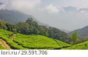 Купить «Mountain tea plantation in Munnar, India», видеоролик № 29591706, снято 24 октября 2018 г. (c) Михаил Коханчиков / Фотобанк Лори