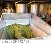 Купить «Destemmer crushing white grapes», фото № 29592138, снято 13 сентября 2018 г. (c) Яков Филимонов / Фотобанк Лори